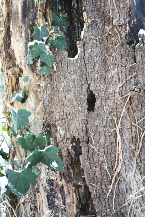 Baum im Volksgarten (11)
