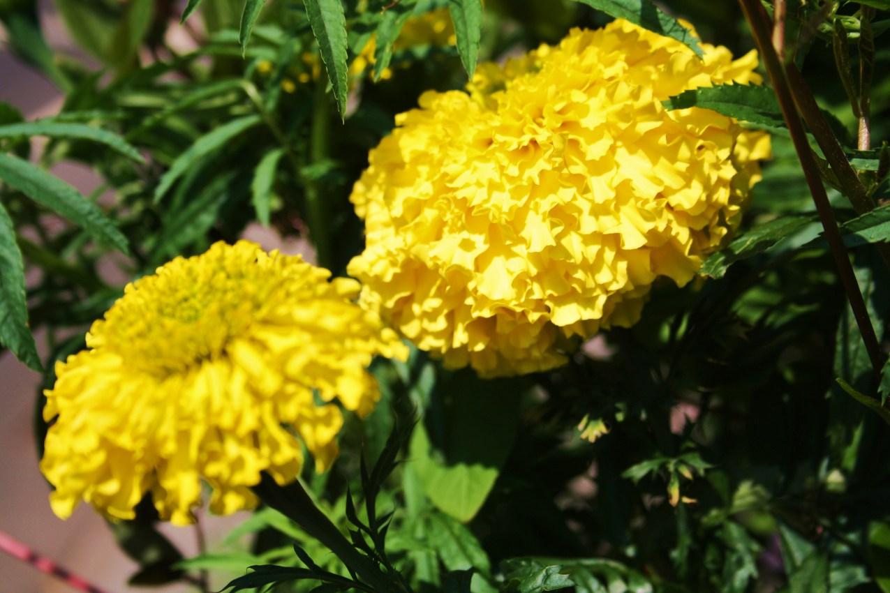 Die Farbe Gelb : die farbe gelb und ihre bedeutung in der farbenergieberatung farbenreich weblog ~ Watch28wear.com Haus und Dekorationen