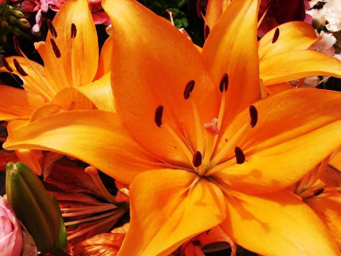 Die Farbe Orange Und Ihre Bedeutung In Der Farbenergieberatung