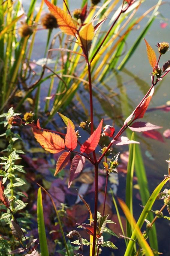 FARBENWUNDER der Natur im goldenen Oktober Pflanzen