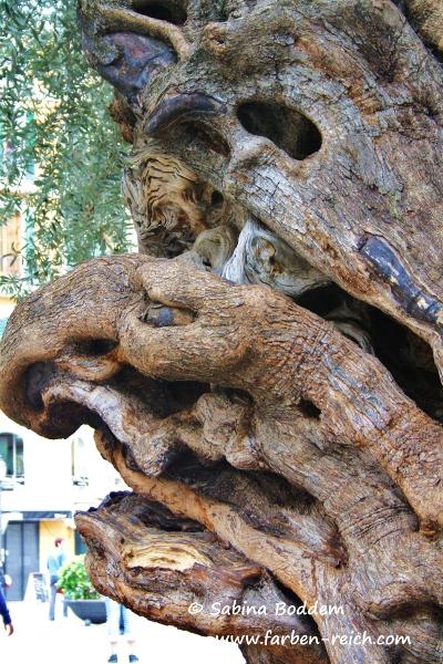 Olivenbaum in Palma de Mallorca