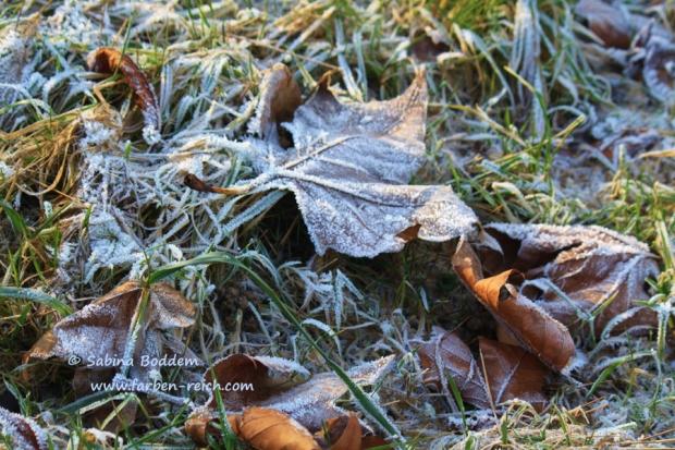Eiskleider der Natur