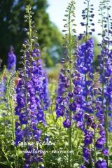 Die Farbe Violett (Lila)