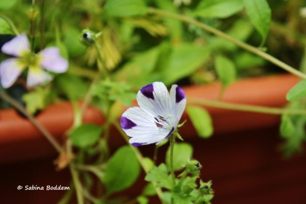 Wildwiesenblumen