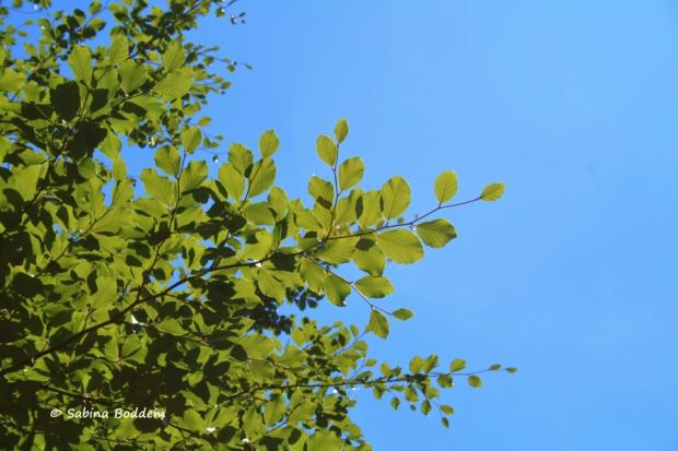 blauer Sommerhimmel mit Baum