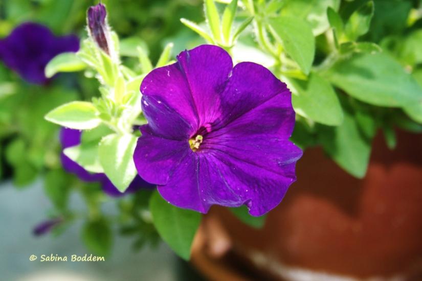 violette Betunie