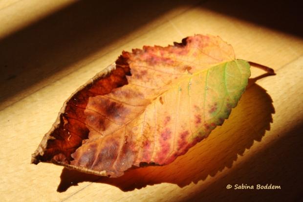 Herbstfarben, buntes, welkes Blatt