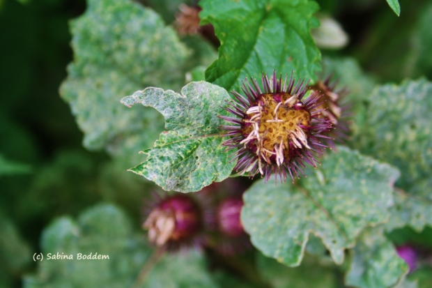 Blumen im Spätsommer
