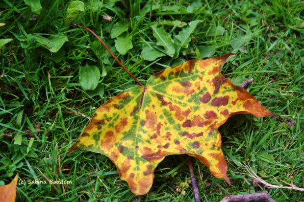 Herbstblatt, Herbstlaub, Herbstfarben