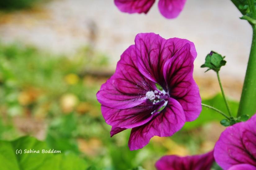 Blume im Spätsommer