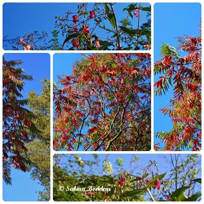 Bäume im goldenen Oktober