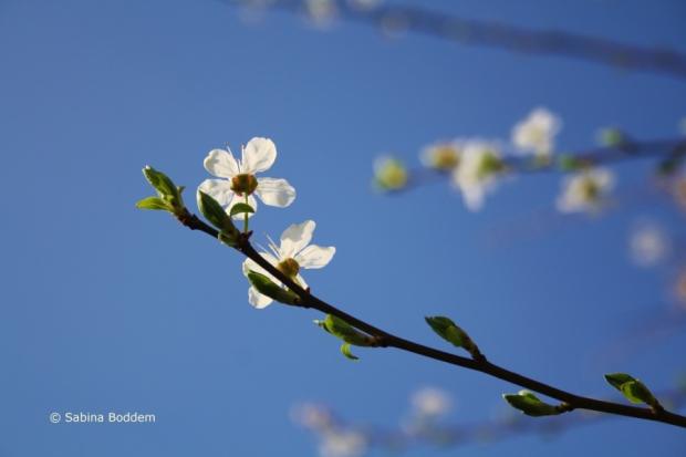 weiße Blüten # Farbenreich