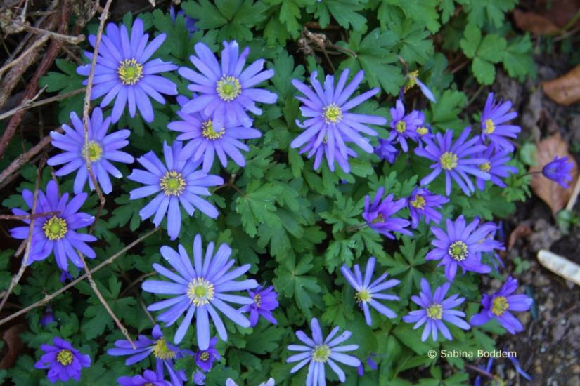 violette Blüten # Farbenreich