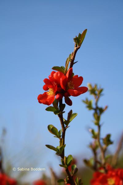 rote Blüten # Farbenreich