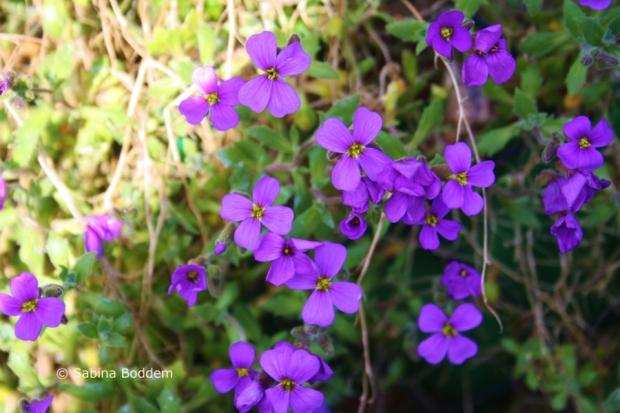 rotviolette Blüten # Farbenreich
