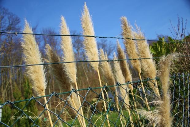 Gräser # Farbenreich