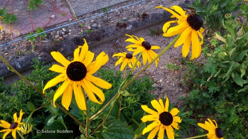 Farbenpracht der Natur im August
