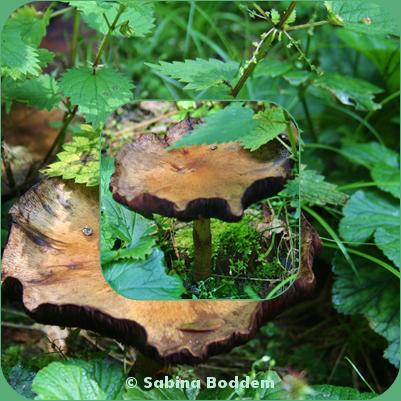#Farben der #Natur im #September #Waldpilze