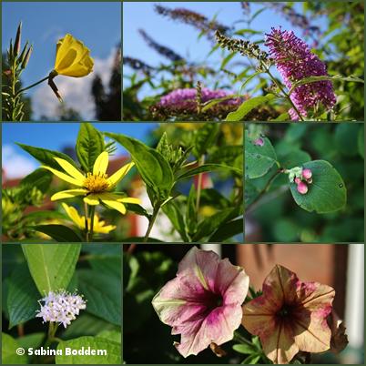 #Farben der #Natur im #September #Blumen