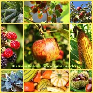 Herbst, Herbstfarben, Farben der Natur, Natur, Bunt ist gesund