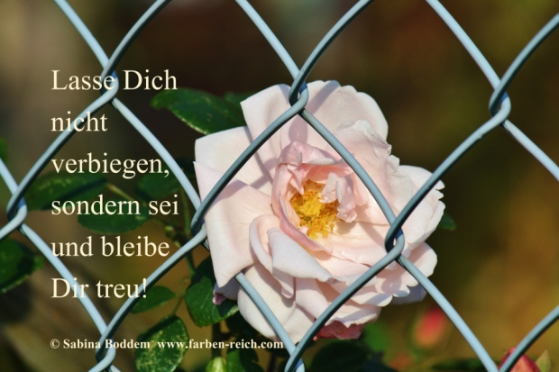 #Rose #RoseHinterGitter #LasseDichNichtVerbiegen #BleibeDirTreu