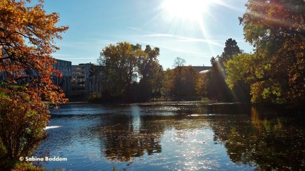 #WeiherAnDerLandskrone #Hofgarten #Düsseldorf