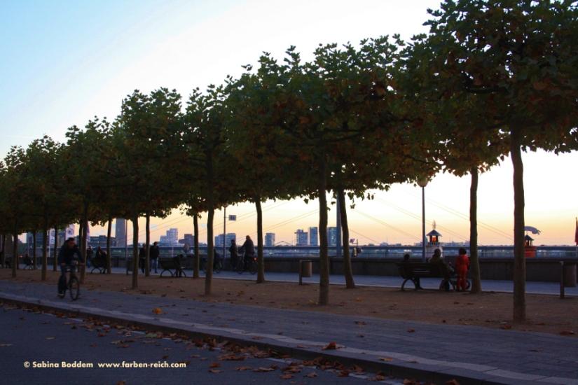 #Rheinuferpromenade #Düsseldorf