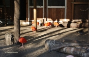 Bunte Vogelwelt im Affen- und Vogelpark Eckenhagen