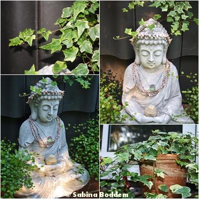 Buddha, Efeu