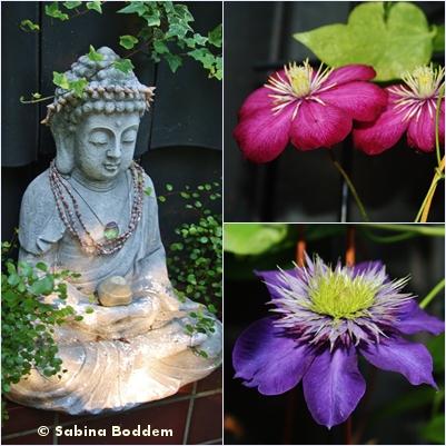 Buddha, Klematis