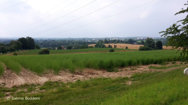 Düsseldorf' s Umgebung zwischen Knittkuhl und dem Schwarzbachtal (27)