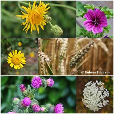 Sommerblumen und Ähren