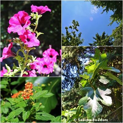 Sommerimpressionen (3)