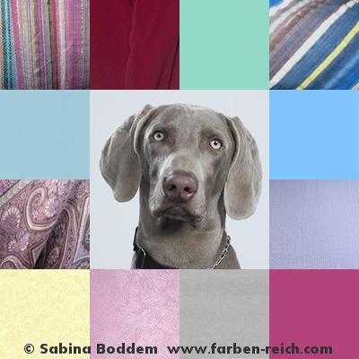 Sommertyp, aschbraun, graubraun, Farbberatung, Farbenreich