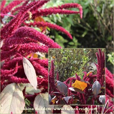 herbstfarben-der-natur-10