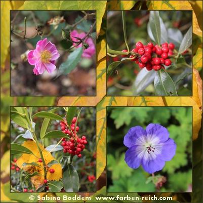 herbstfarben-der-natur-4
