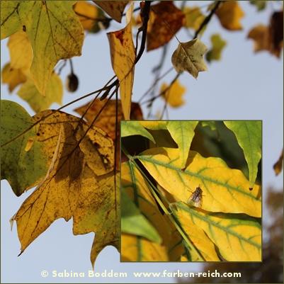 herbstfarben-der-natur-5