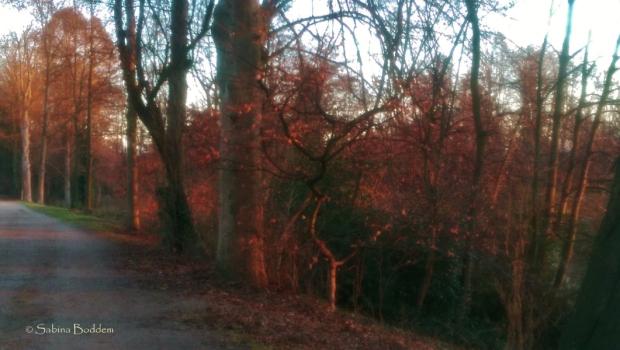 am-ostpark-in-duesseldorf-2