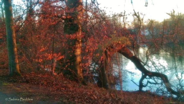 am-ostpark-in-duesseldorf-3