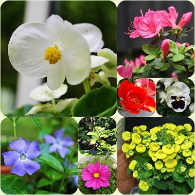Wochenendgrüße Farbenreich Weblog